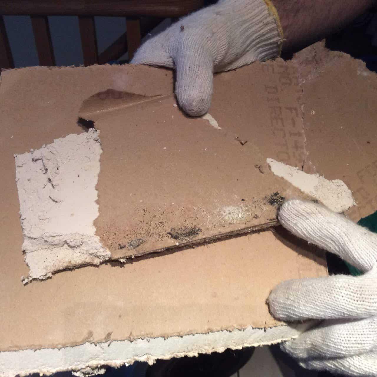 mold remediation GTA